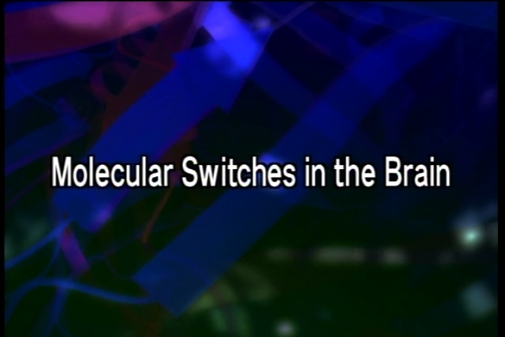 Molecular Switches in the Brain